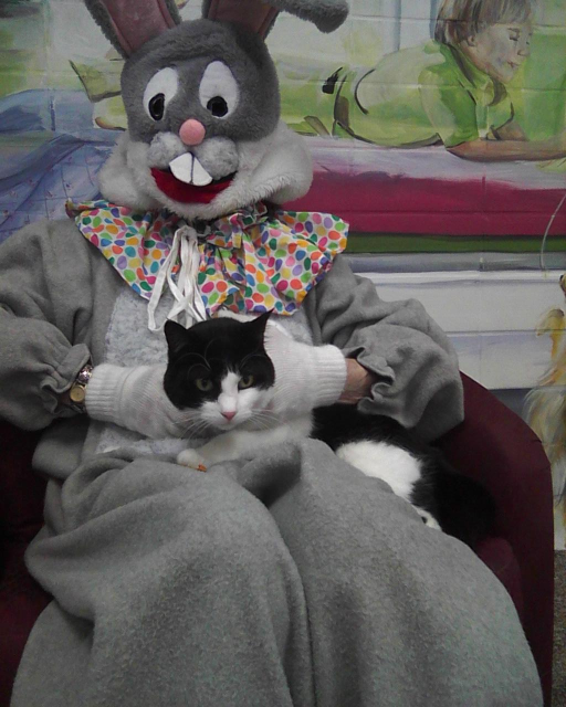 tuxedo cat being held on the lap of the Easter Bunny