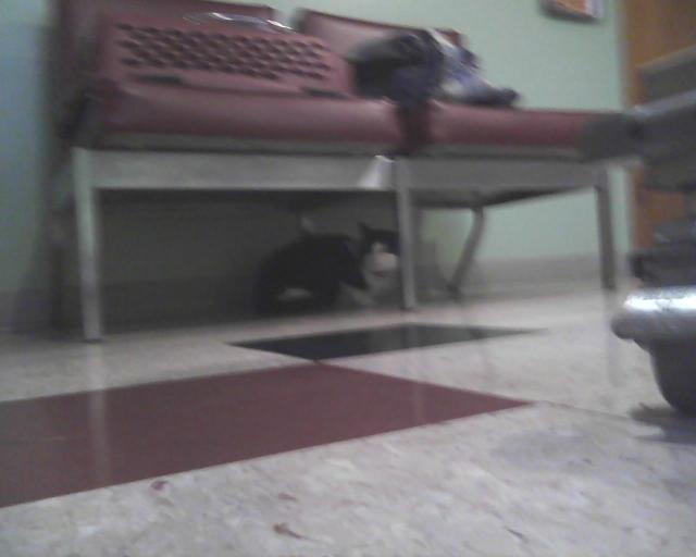 tuxie cat under couch