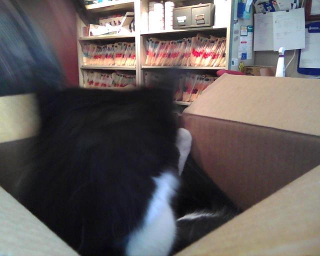 cat in box again