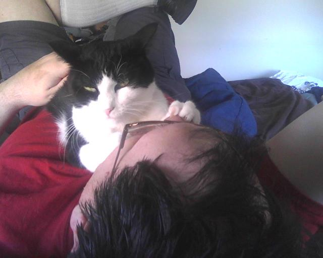 cat sitting on person's face