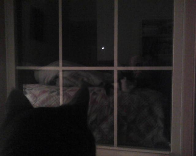 cat looking out window at moon