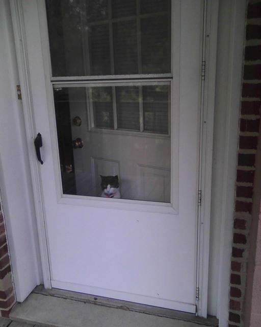 cat looking out screen door