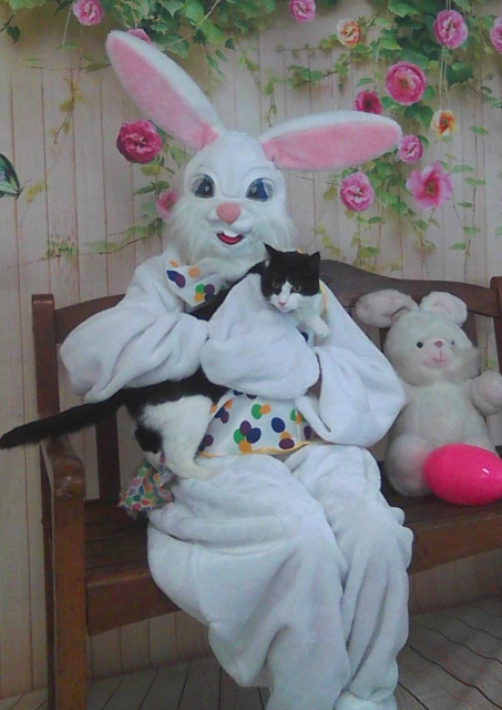 black and white cat on Easter Bunny's lap