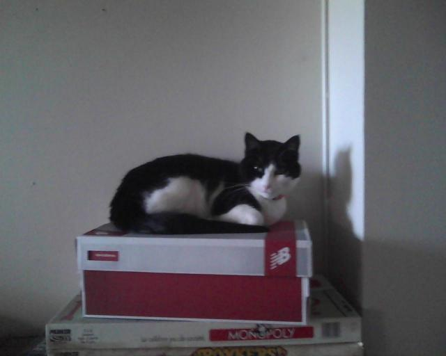 cat sitting on a shoebox
