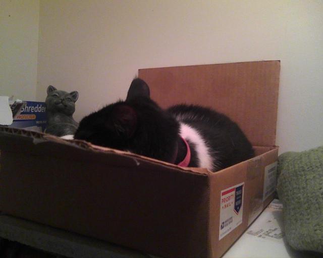 sleeping in a box on a shelf