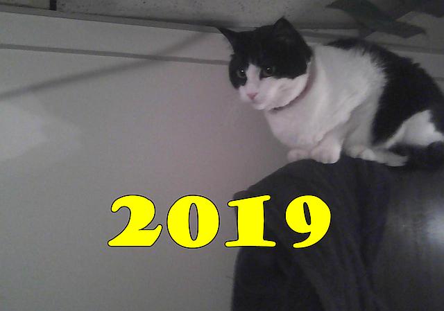 New Year 2019 with tuxedo cat