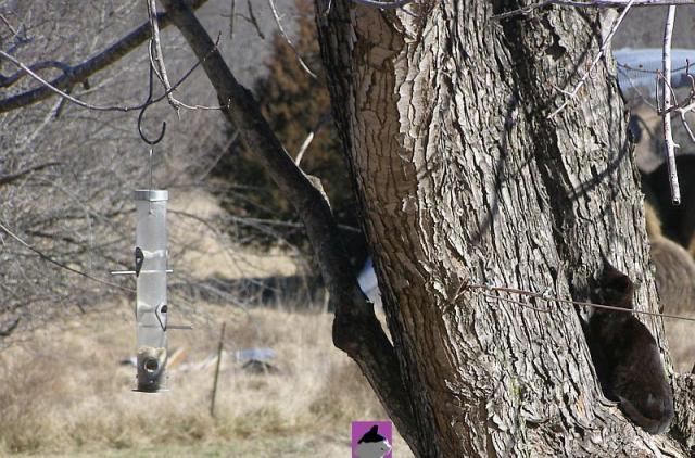 kitten in tree watching bird feeder