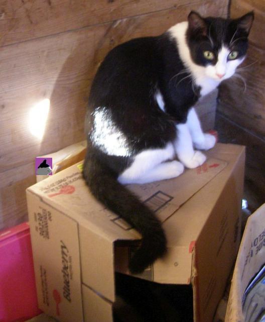 Parker on a box