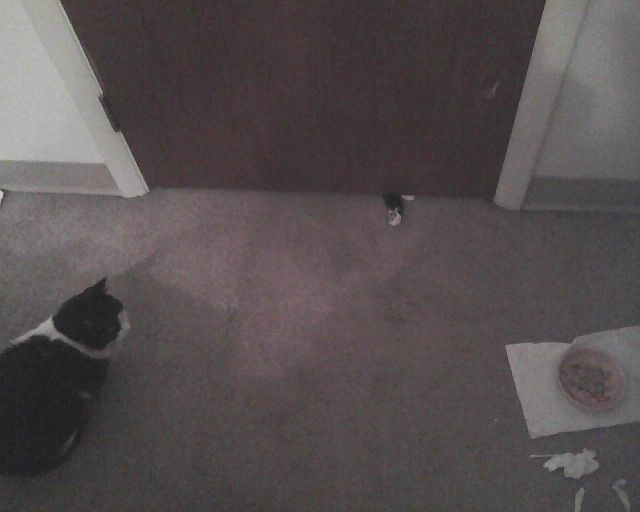 cat puts his paw under door while another cat watches