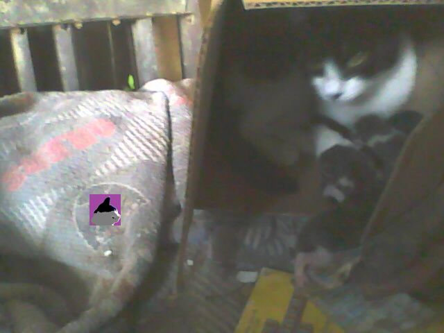 Smudge in a box with kittens