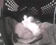 closeup of cat sleeping in carrier
