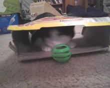 cat in eggo box with green ball