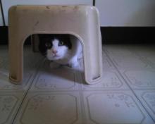 cat under step stool