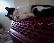 cat on top of cat carrier showing toes