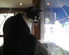 cat looking out window at birdfeeder