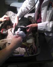 cat in half of cat carrier being examined by veterinarian and technician