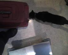 cat saying hello to other cat in carrier