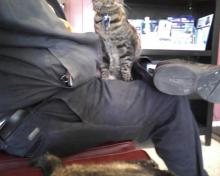 cat on a lap and cat on the bench