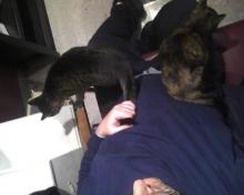 two cats on one lap