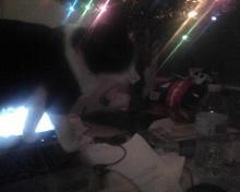 cat on laptop computer under Christmas tree