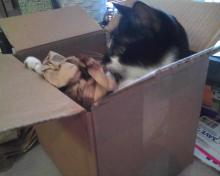 cat with papers in box