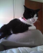 cat on lap -- khaki pants