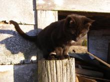 black kitten on post