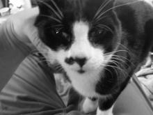 cat sitting on lap