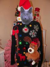 cat in ugly dog Christmas sweater