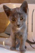 small grey kitten on a chair