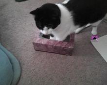 cat in box of facial tissue