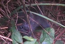 kitten in bushes