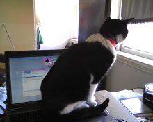 cat sitting on computer