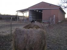 Parker cat on hay bale
