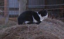black-and-white cat sitting on a hay bale
