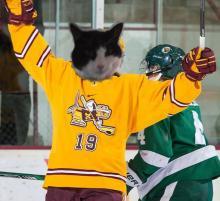 cat in gopher hockey sweater