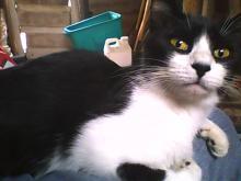 Smudge Prettycat's picture