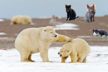 cats watching polar bears