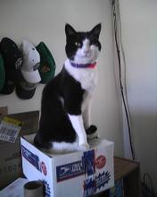 cat sitting on box