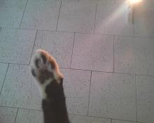 black kitty toes