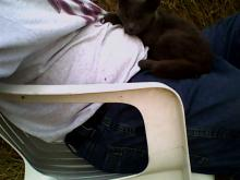 grey cat sleeping on a lap
