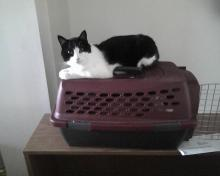 cat sitting on carrier