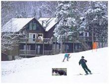 cats at ski lodge