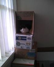 cat sitting in a box