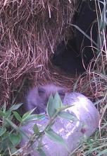 kittens in hay