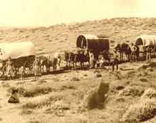 Three cats by a wagon train