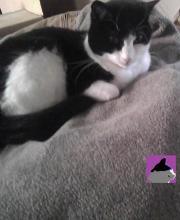 cat sitting on winter coat