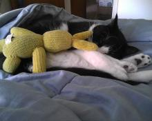 tuxedo cat with yellow toy bunny