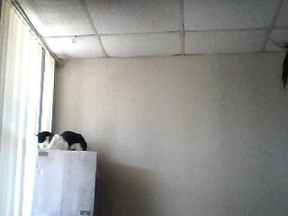 cat sitting on box tower