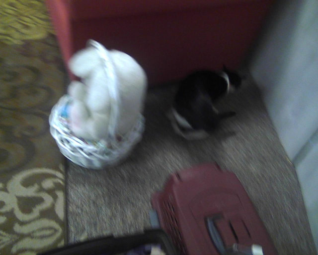 cat exploring behind stuffed Easter bunny